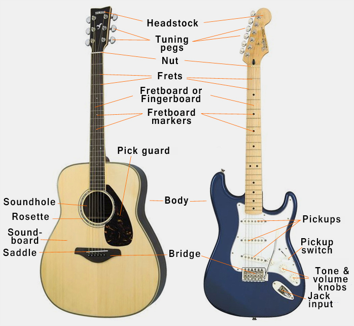 Image result for guitar anatomy